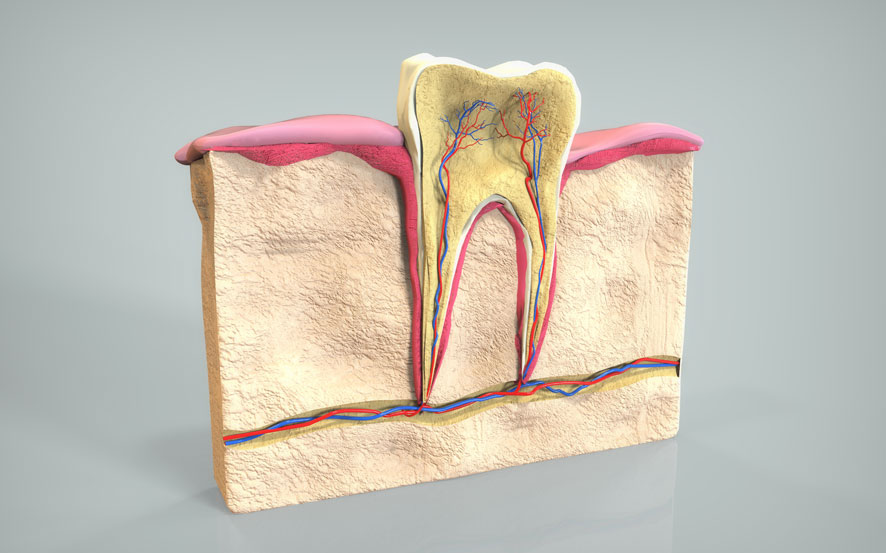 Zahnarztpraxis Barbutova Leistungen Endodontie