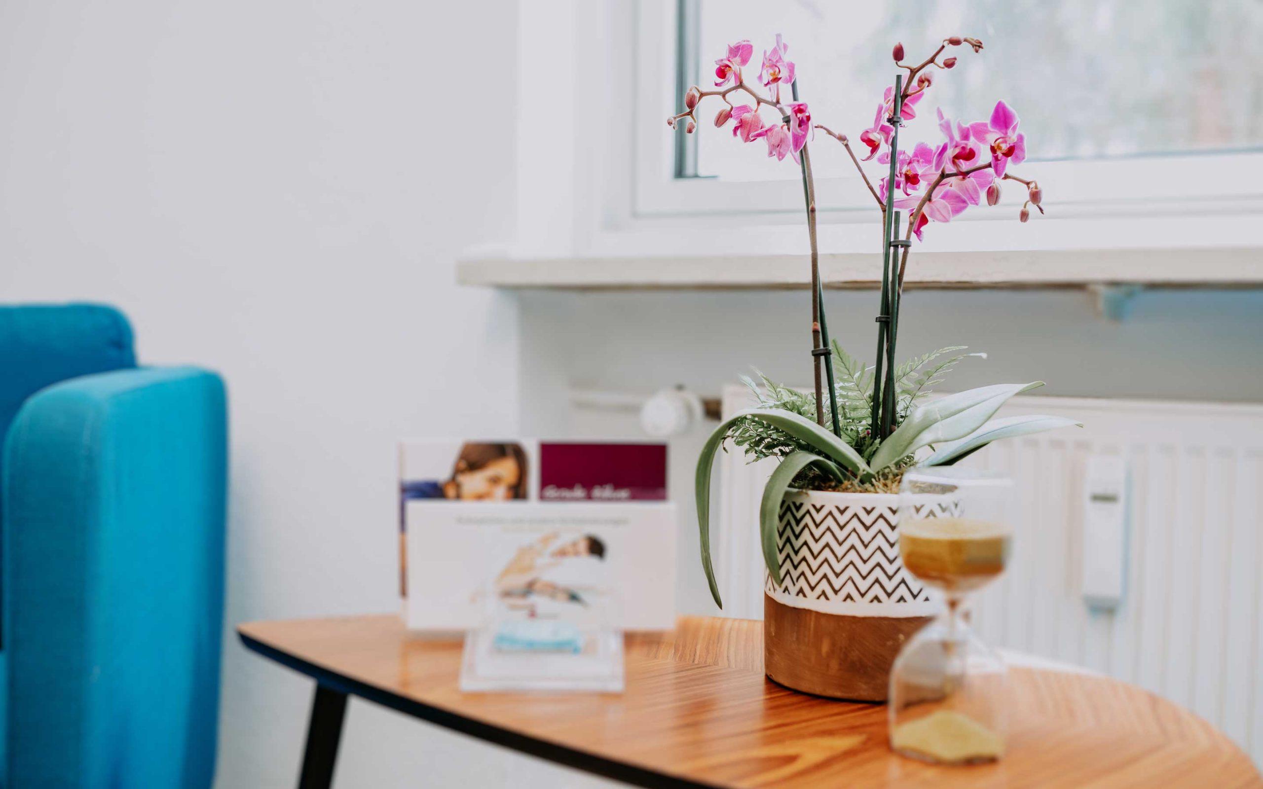 Schöne Blume im Wartezimmer von Zahnarztpraxis Barbutova